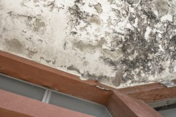 Effects of damp on plaster